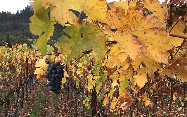 Napa Valley Cabernet November