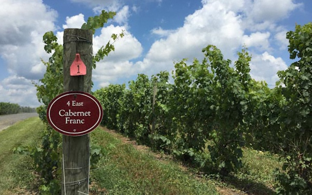 Millbrook Vineyards & Winery- Dutchess Wine Trail