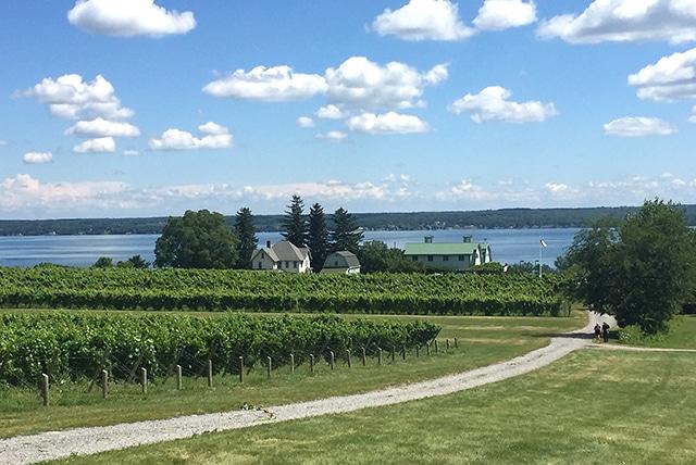 Seneca Lake - Fox Run Vineyards
