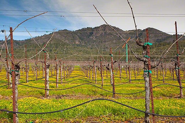 Mount Hood St. Francis winery