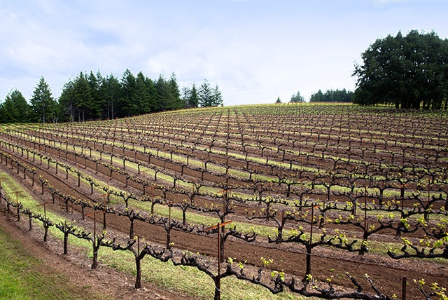 Mariah vineyards mendocino ridge