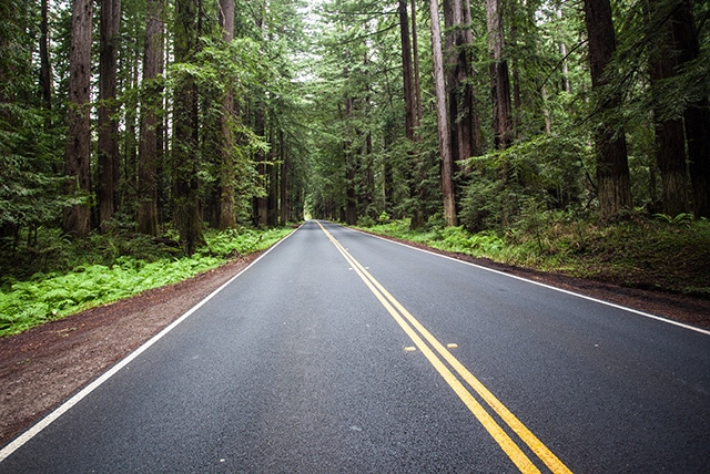 Navarro Redwoods