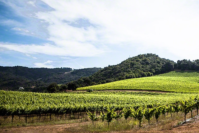 Monte Rosso vineyard