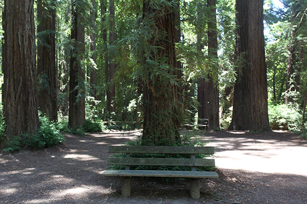 Majestic Redwood Grove at Riverfront Regional