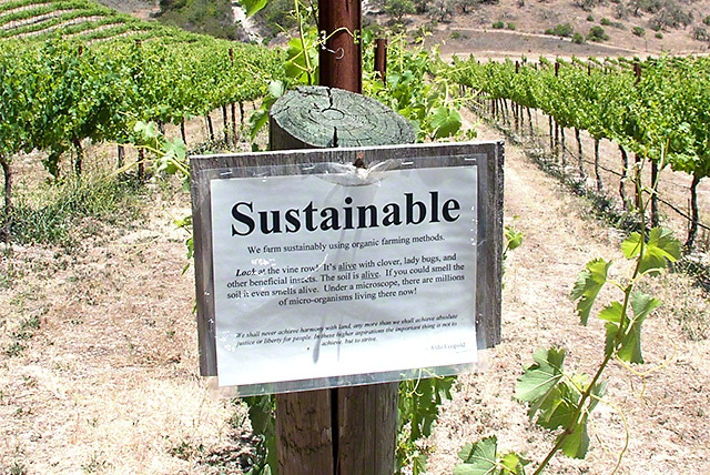 Sustainable vineyard