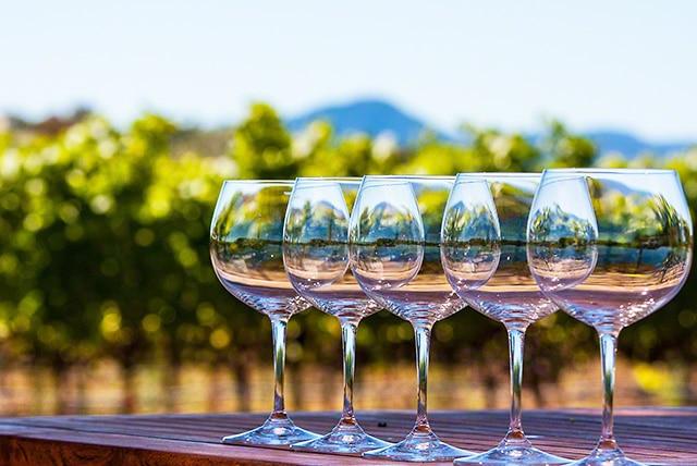 wine glasses pinot noir