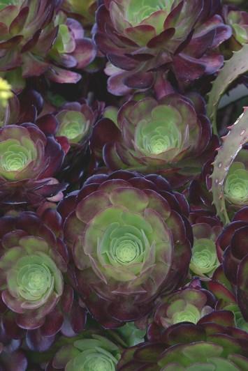 Botanical Gardens Succulents