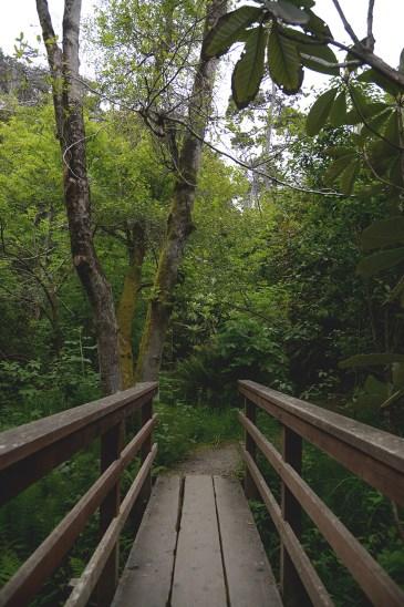 Botanical Gardens Bridge