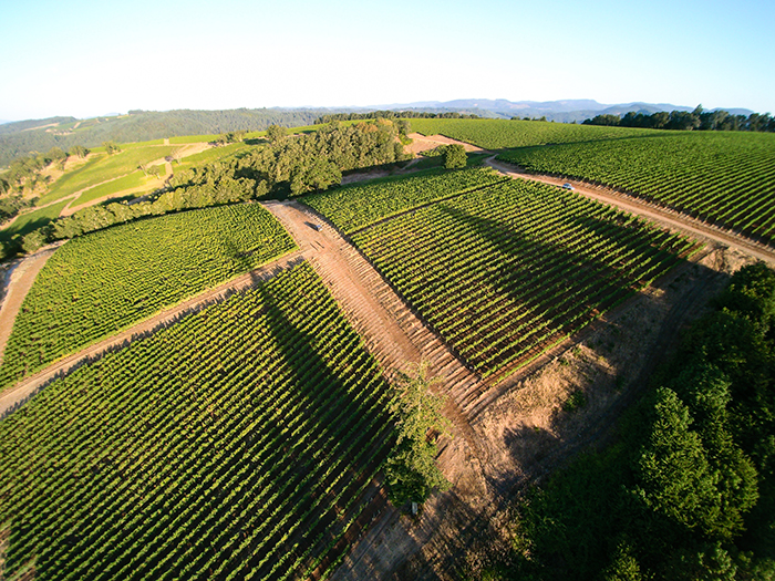 Momtazi Vineyard / Photo by Chris Low