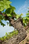 wineplease_torrensMoliner__0063
