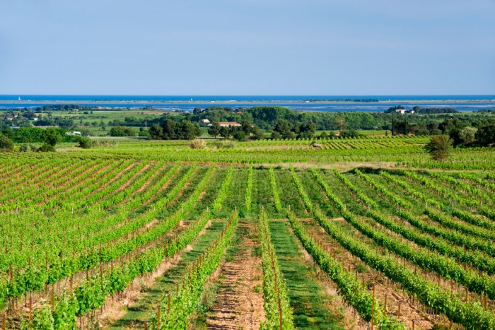 Les Caves Richemer 50 Great Sparkling Wines of the World