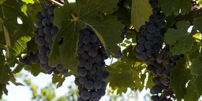 Wine Facts [Part 1]
