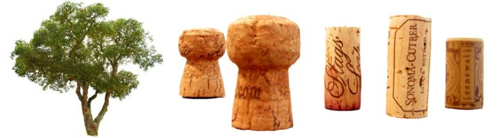 Wine Cork Story [Part 1]