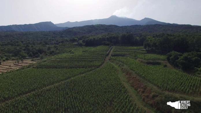 landscape etna i vigneri etna doc milo