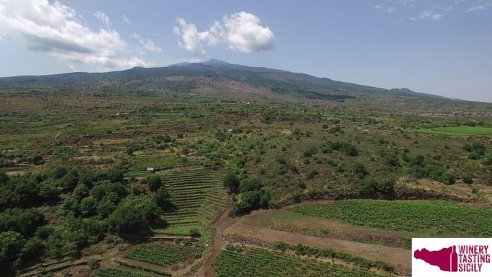 Firriato Vini dell'Etna l'anteprima in digital tasting delle nuove annate della Tenuta di Cavanera
