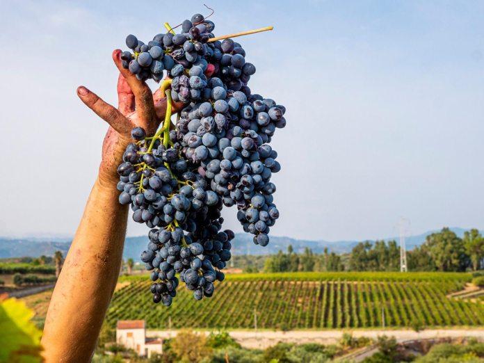 Vini Siciliani di qualità nell'annata 2020