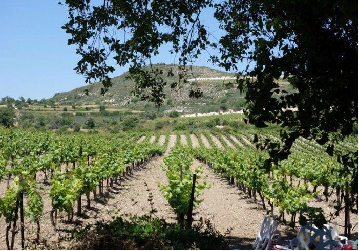 A mini wine-tour for €45