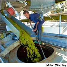 Photograph of grape press by Milton Wordley