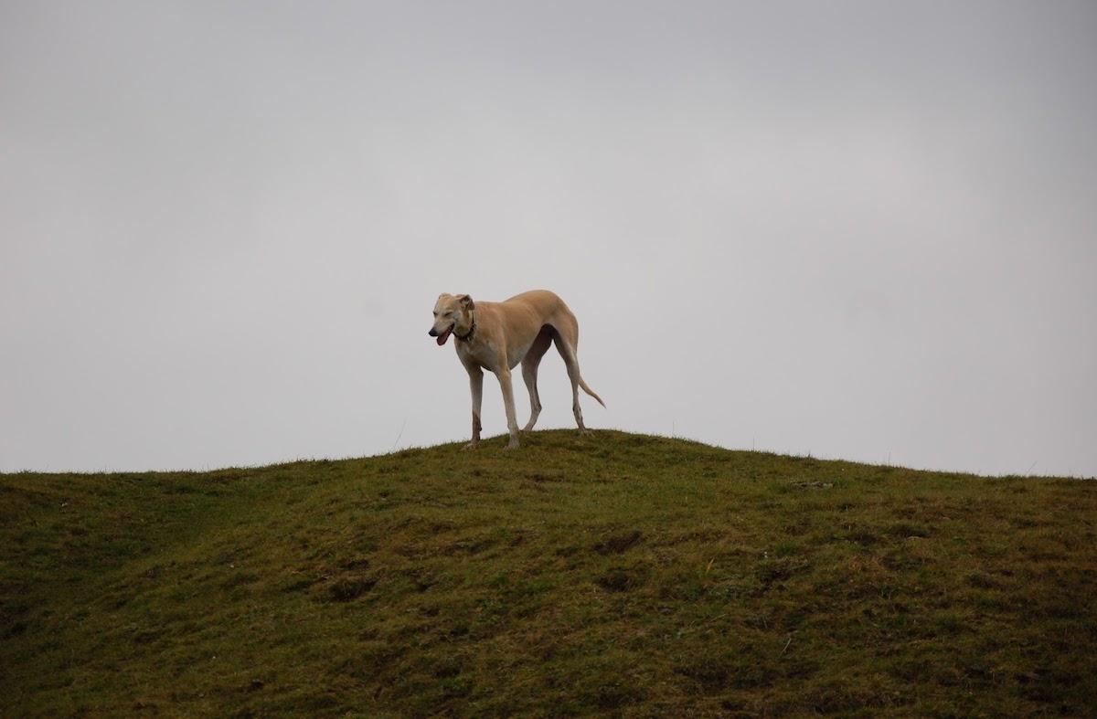 Dog on Solsbury Hill