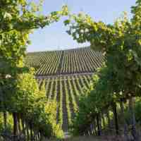 Dennis Cakebread Talks Washington Wine & Mullan Road Cellars