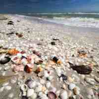 Romantic Getaway - Wine Tasting & Shell Hunting on Sanibel Island