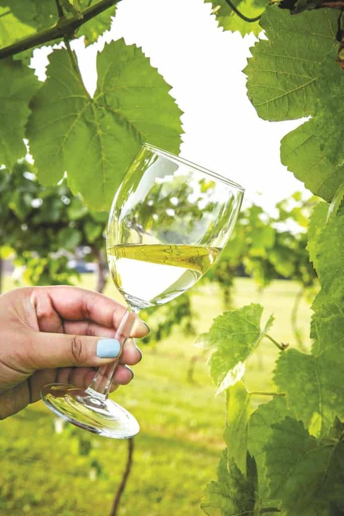 Wine Tasting Ohio's Hidden-Gem Wine Regions