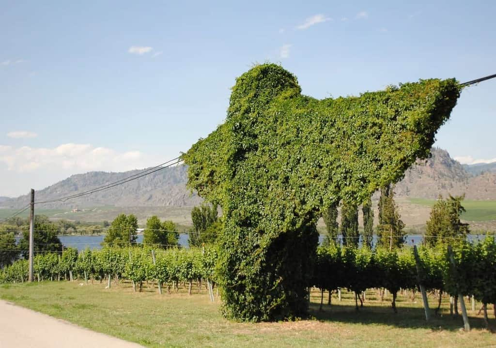 Oliver & Osoyoos Wine Country: Best Wineries, Restaurants & Hotels