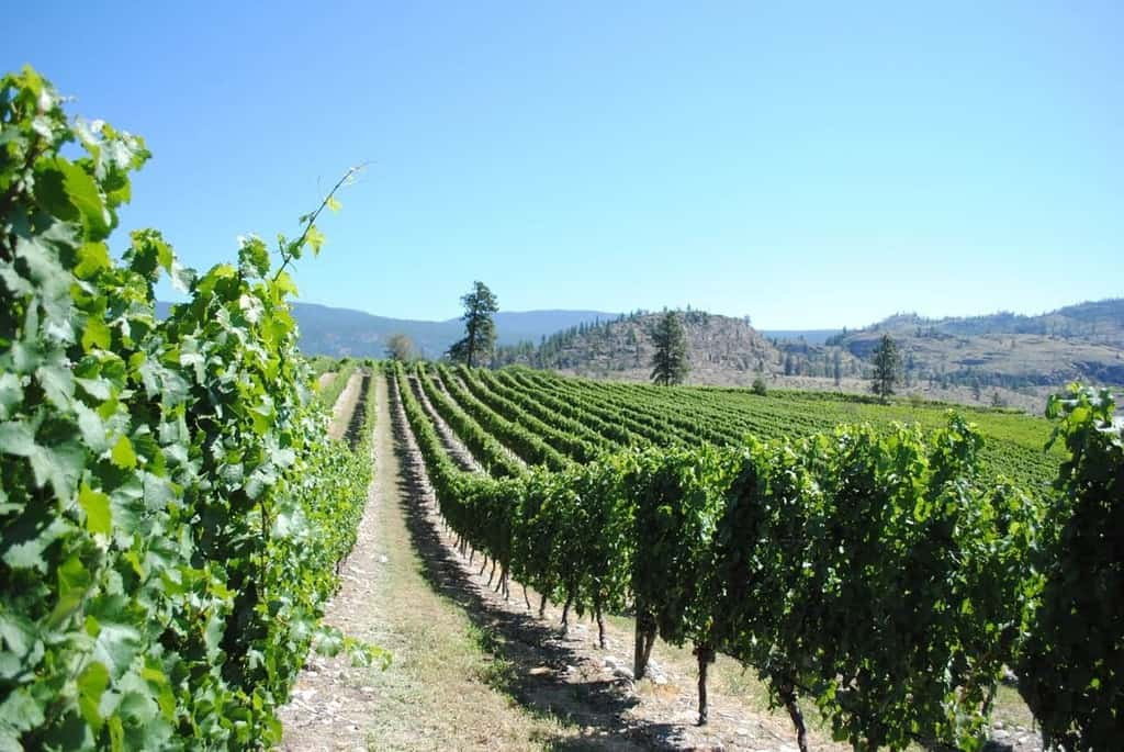 How To Explore Okanagan Falls British Columbia: Winery, Restaurant & Hotel Travel Guide