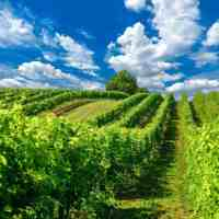 Sparkling Wines To Try From Regions Around The World
