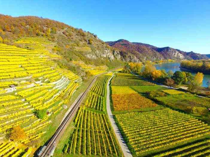 best wine vinyards