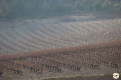 Wine Up en Vega Sicilia IMG_3019