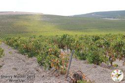 #SherryMaster por Wine Up IMG_0620