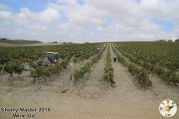 #SherryMaster por Wine Up IMG_0629