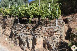 wine up IMG_2864