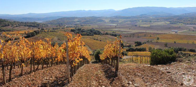 wineup IMG_2025 - 2 secastilla