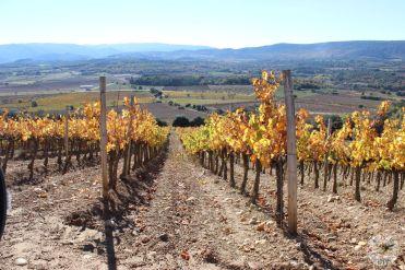 wineup IMG_2093 secastilla
