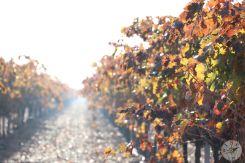 wineup IMG_4244