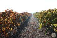 wineup IMG_4253