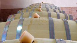 Barricas fermentando vino blanco
