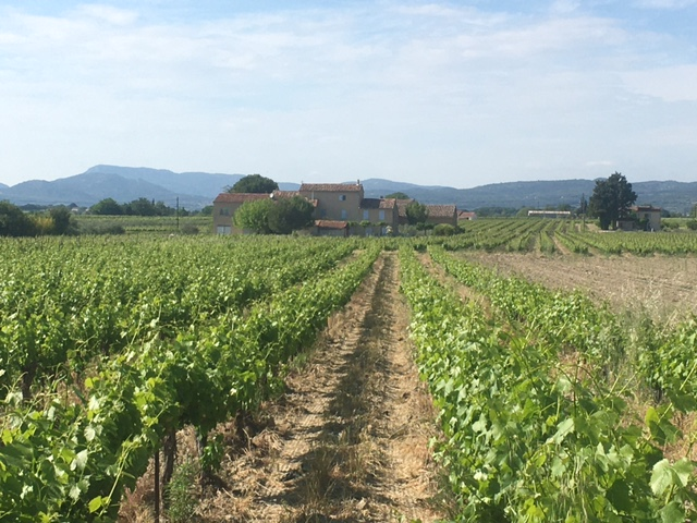 Wines and vines in the Ventoux