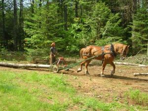 Horse drawn logging arch