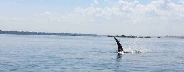 Spotting the Irrawaddy Dolphins
