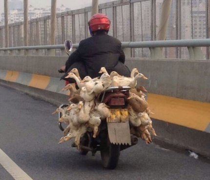 How many ducks can you get on a moped? WTF China?
