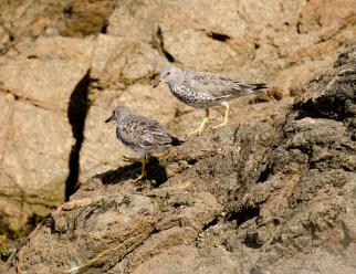 March Surf Birds2