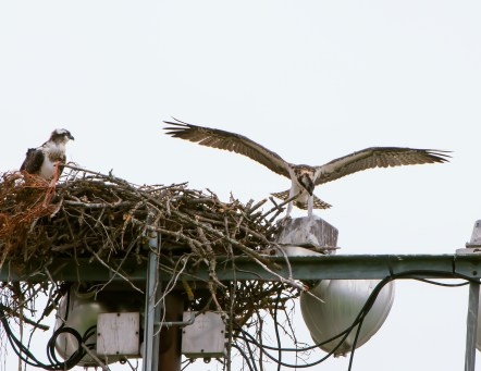 Out of the nest--but not too far
