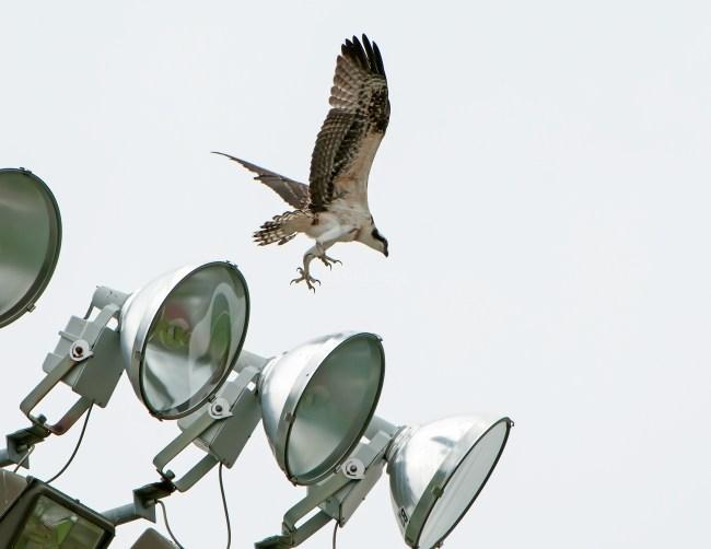 Precarious landing