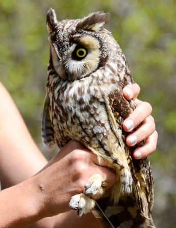 Montana Owl Tour 18