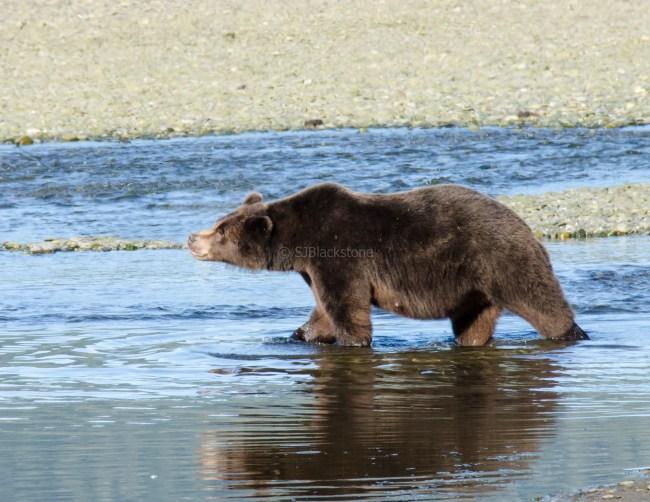 090318 Alaska Cruise 0283 copya