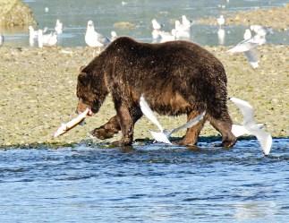 090318 Alaska Cruise 0501 copya