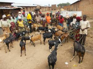 Several people with goats